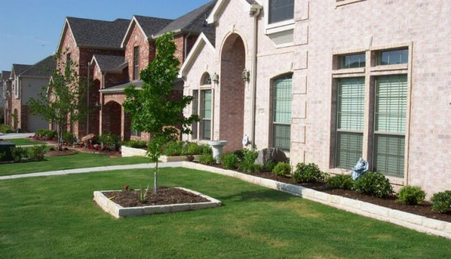 Beautifully trimmed lawn with tree accent