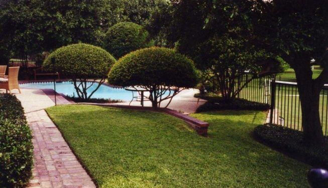 Green lawn by beautifully trimmed bushes
