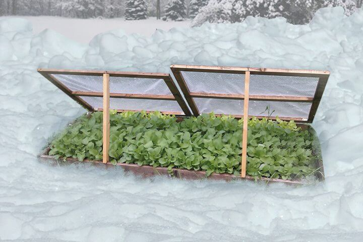 cold frames winter