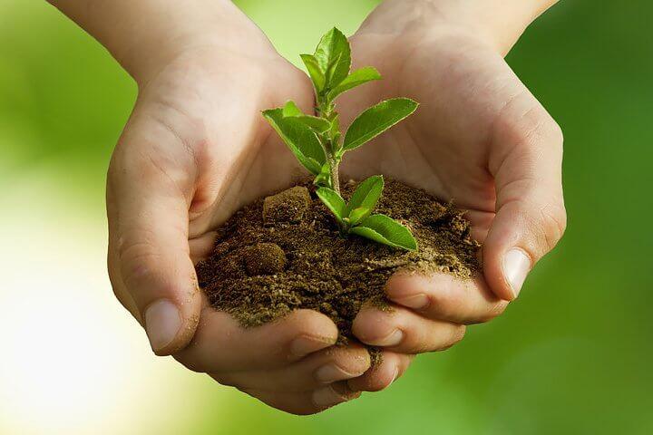 sustainable gardening texas