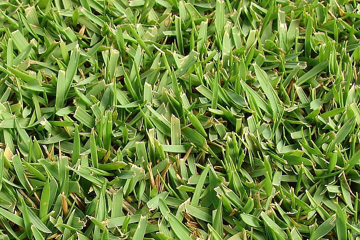 Best Grasses For Residential Landscapes In North Texas