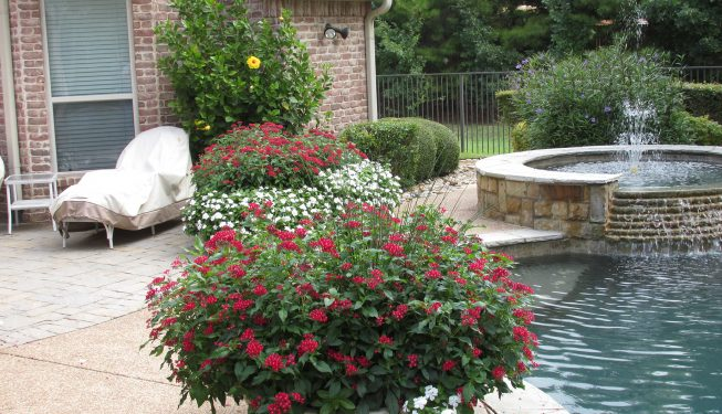 Flowers and Shrubs by Pool - Jenkins