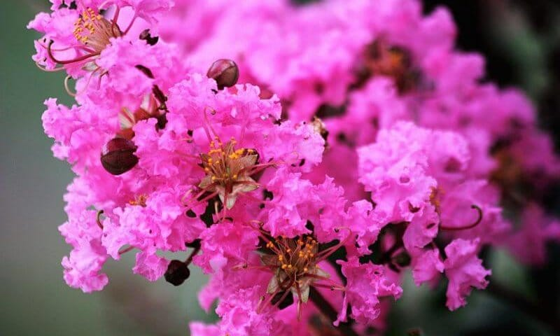 best shrubs and trees north texas