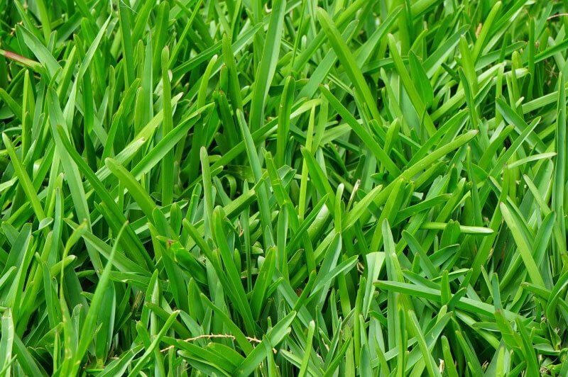 Best Grasses For North Texas Tips On Improving Your Lawn Scape