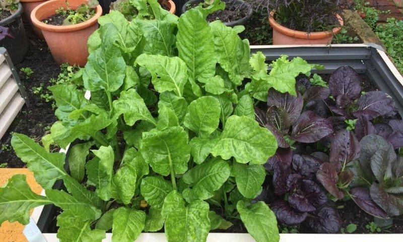 fall clean up veggie garden