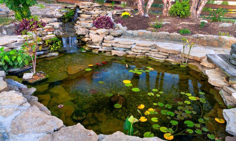 fall pond maintenance