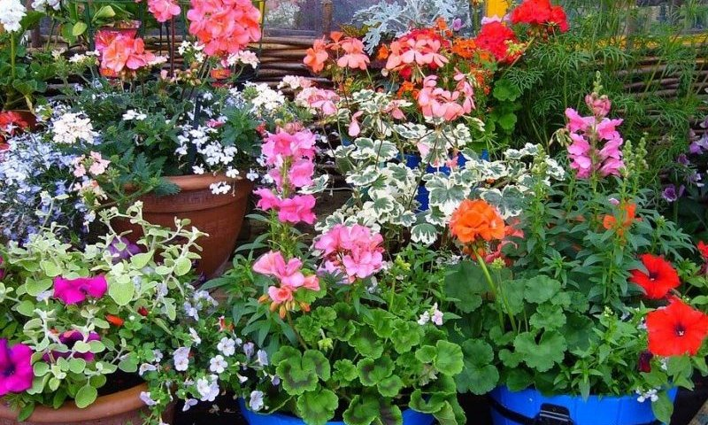 transitioning container plants