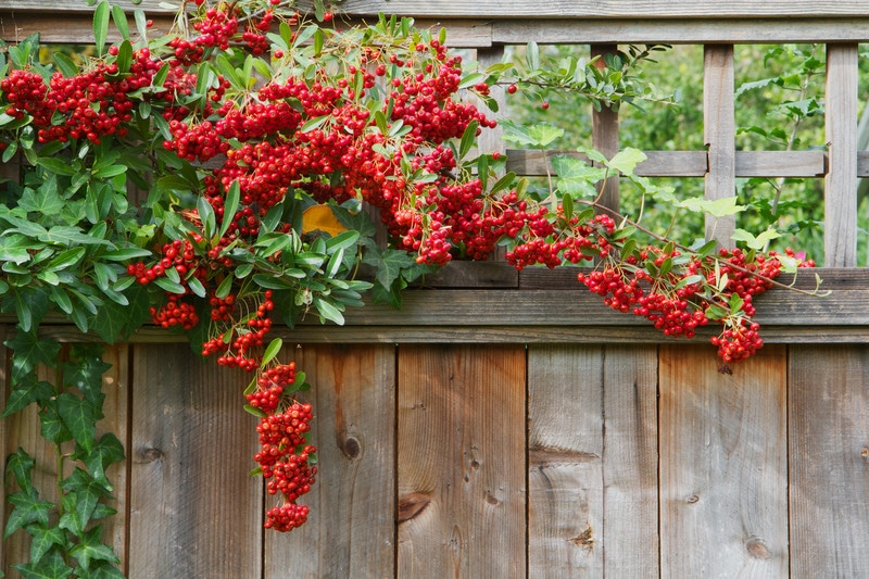 Best Plants For Privacy Screening Your Homes With Style In North Texas